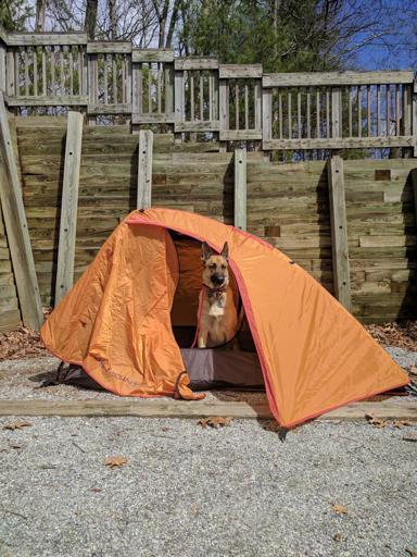 Viira in Tent