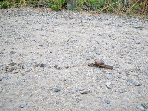 Picture of a Snail, joking about the pace I was moving at